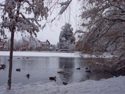 Relatos de Cine:El Cisne del Lago de Hielo